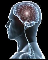 hjärna-neurologi